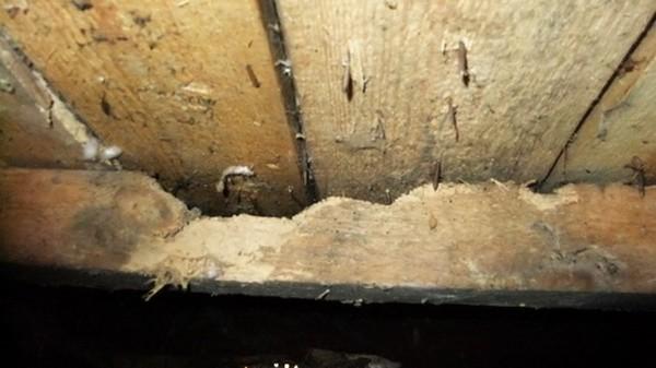 Если грибок поразил большое количество деревянного пола, лучше избавиться от него полностью и перестелить